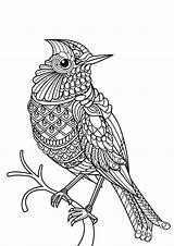 Bird Coloring Birds Patterns Pages Complex Adult Printable Adults Animals sketch template