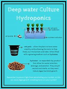 Diy Deep Water Culture Hydroponic System