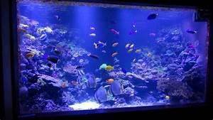 New Pr72 Super Blue Led Over 6000 Gallon Aquarium Orphek