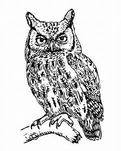 猫头鹰剪贴画插图 免费图片 - Public Domain Pictures