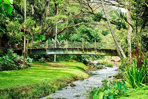 kauai botanical gardens mcbryde garden a conservatory for hawaiian and tropical