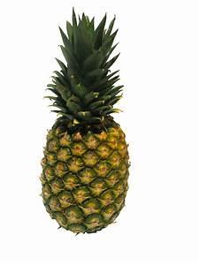 Plant D Ananas : free images fruit food produce pineapple flowering plant ananas ganz bromeliaceae land ~ Melissatoandfro.com Idées de Décoration