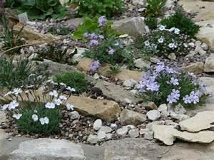 Blumen Für Steingarten : steingarten anlegen blumen weiss lila idee landschaftsgestaltung garten pinterest ~ Markanthonyermac.com Haus und Dekorationen