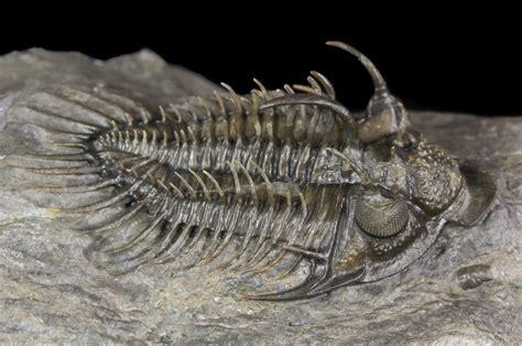 Fossil Premium premium grade fossils for sale fossilera