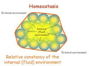 Biology Homeostasis Example