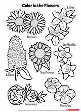 Printable Coloring Flowers Worksheets Pages Activity Learn Printables Pdf Activities Parents Scholastic Science Stackbookmarks Info sketch template