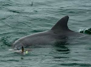 Loud acoustic pingers designed to prevent dolphin poaching ...