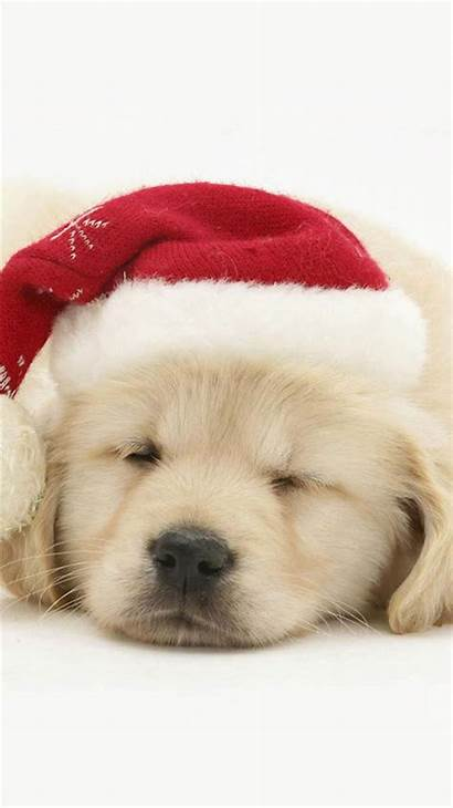Christmas Puppy Iphone Hat Wallpapers Iphone6