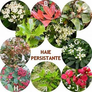 Arbuste Persistant Croissance Rapide : vente haies persistantes ~ Premium-room.com Idées de Décoration