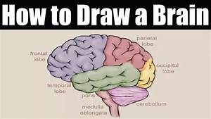 Brain Drawing Simple At Getdrawings