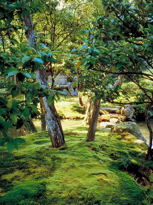 growing  maintenance moss hgtv