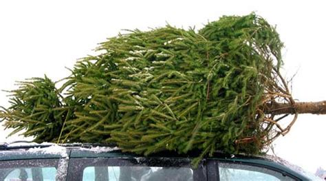 christmas tree delivery to your doorstep z6mag