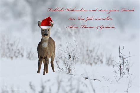 froehliche weihnachten forum fuer naturfotografen