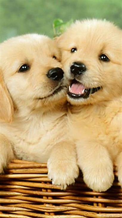 Puppies Dog Iphone Puppy Wallpapers Dogs Puppys