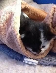 Laver Un Chaton : peut on laver un chaton de 2 3 semaines question ~ Nature-et-papiers.com Idées de Décoration