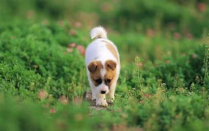 Puppies Dogs Wallpapers Puppy