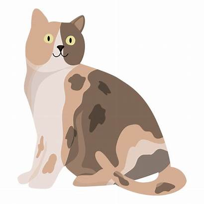 Cat Illustration Animal Transparent Svg Animals Drawing