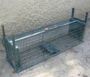 Piege à Rat Efficace : les ennemis des escargots ~ Dailycaller-alerts.com Idées de Décoration