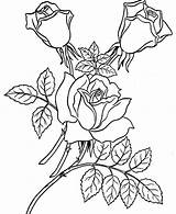 Rose Coloring Garden Roses Pages sketch template
