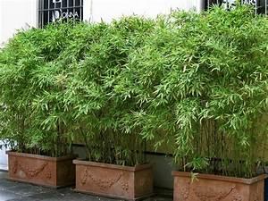 bambus im kubel kann eine terrasse im garten oder einen With französischer balkon mit sträucher im garten