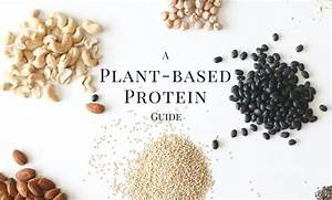 A Guide To Plant