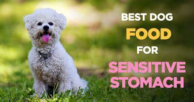 sensitive stomach dog food dog food recipes  healthy