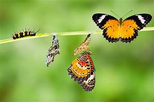 There Has Been A Change Caterpillar To Butterfly