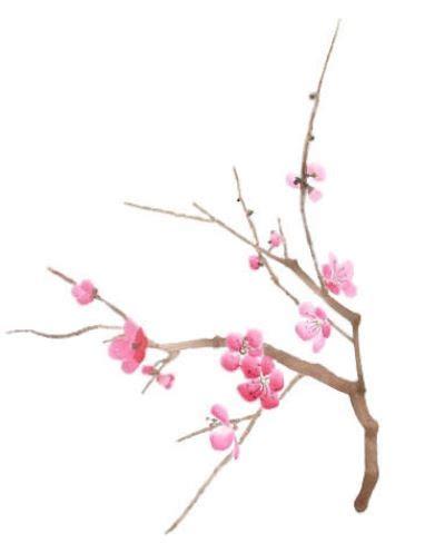 tatuaggio ramo fiori di ciliegio disegno per tatuaggio ramo di ciliegio the house of