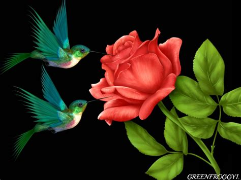 roses  birds wallpaper wallpapersafari