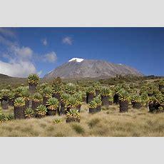 Best Value Tanzania And Kenya By Road, Small Group Safari