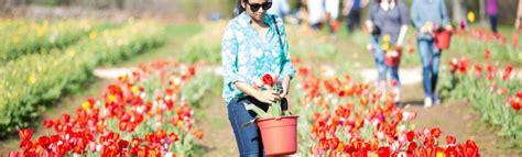Tulipark, A Roma Apre Il Primo Giardino Di Tulipani Upick