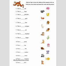 Abc Animals Practice  Esl Worksheets Of The Day  English Worksheets For Kindergarten, English