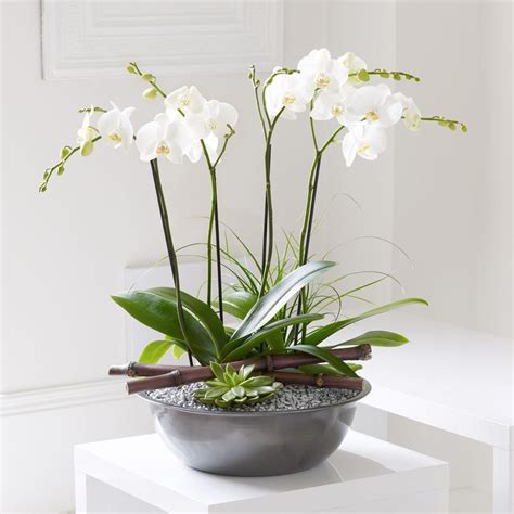1000 images about orchids on