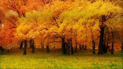 Wallpapers Fall Bing Autumn Background 1366 768
