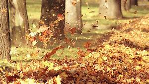 Autumn HD Wallpapers - HD Wallpapers