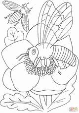 Bee Flower Coloring Pages Bees Insects Printable Flowers Butterflies sketch template