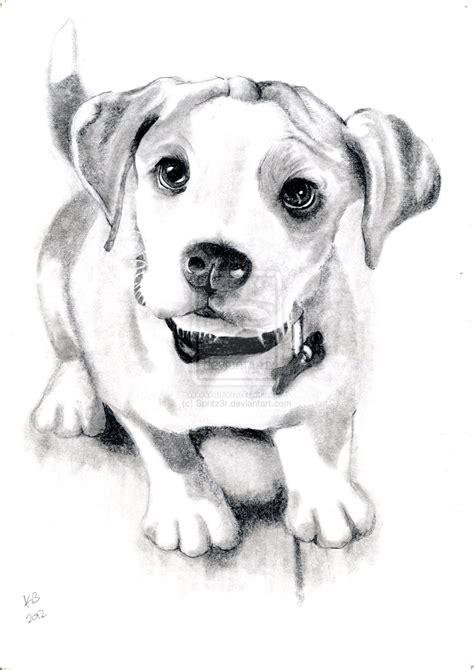 Dog Sketch By Spritzr On Deviantart