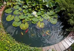 Teich anlegen diese materialien und gerate brauchen sie for Garten planen mit deko bonsai kunststoff
