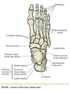 Human Foot Bones Diagram
