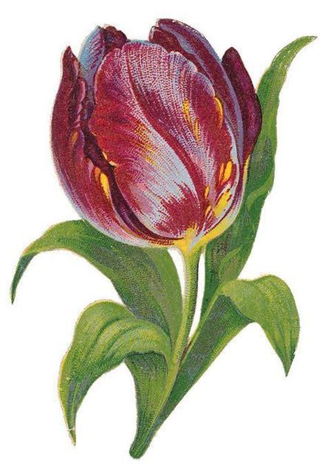purple tulip   tulip painting flower art flowers