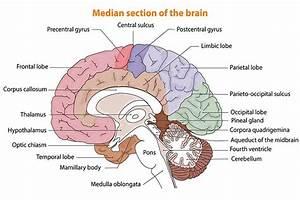 Understanding Brain Damage Locations