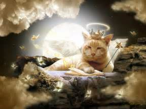 quotes about cats and heaven quotesgram