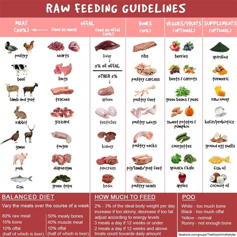 raw dog food guidance chart raw dog food recipes raw