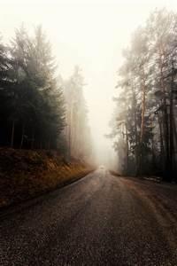 Free, Images, Natural, Landscape, Atmospheric, Phenomenon, Fog, Nature, Sky, Tree, Mist, Morning