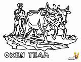 Coloring Farmer Pages Tractor Oxen Farmers Farm Ox Boys Yescoloring Earthy Pic sketch template
