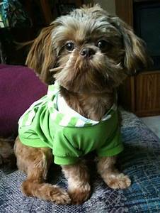 Cute Shih Tzu Puppies - Puppy Pictures - Page 3