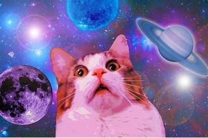 Cat Wallpapers Meme Space Desktop Iphone