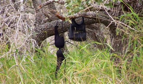 rape trees dead migrants   consequences   open