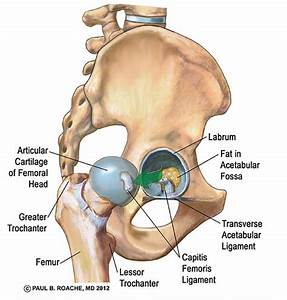 Hip Anatomy Yoga