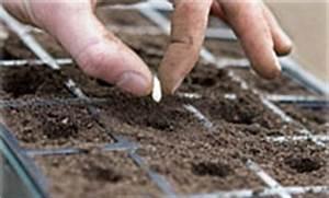 Planter Des Graines De Tomates : le semis ~ Dailycaller-alerts.com Idées de Décoration